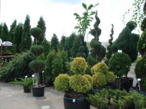 На фото - декоративные растения, greenbrest.by