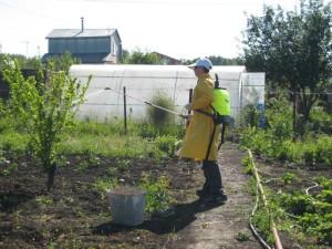 На фото - обработка сада от вредителей, втетради.рф