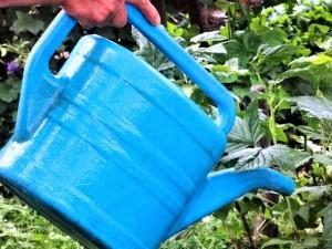 На фото - полив кустов горячей водой, venskayadacha.com