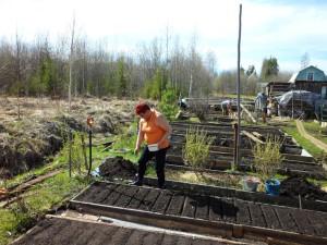 Фото посева укропа, dacha-olgino.narod.ru