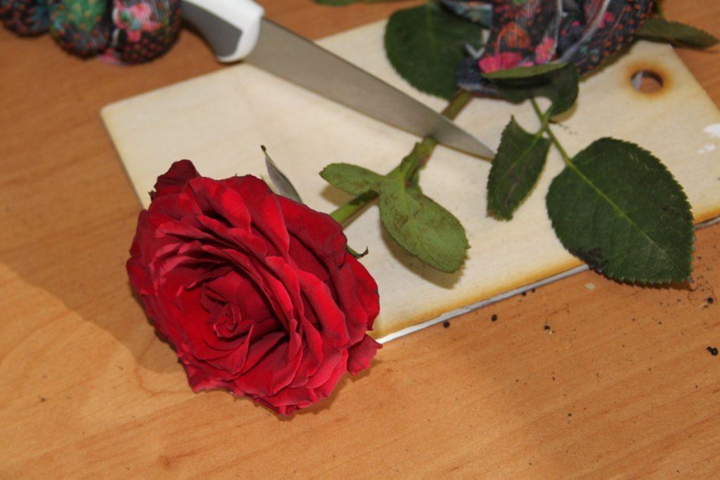 Обрезка розы для заготовки черенка