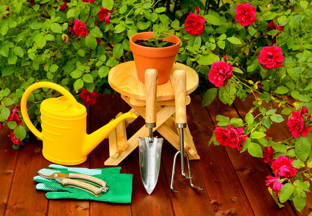 Цветущие розы и садовый инструмент