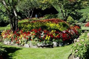 Фото красивых садовых цветов, gortenzija.com