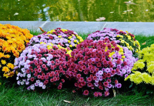 Фото декоративных цветов для сада, sadby.org
