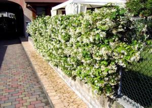 На фото - живая изгородь из декоративных цветов, green-portal.ru