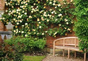 Фото украшения фасада дома вьющимися растениями, landscape-expert.com