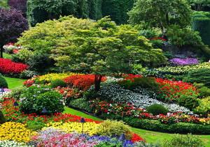 На фото - декоративные садовые растения, mega-stroyka.com