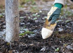 Фото корневой подкормки садовых растений, derevoved.com