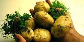 Борьба с сорняками на картофеле – наиболее эффективные решения