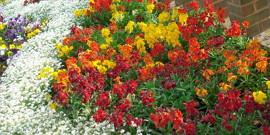 Цветоводство в саду