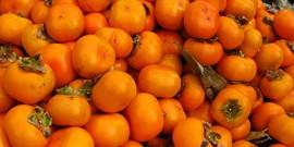 Хурма – выращивание из косточки своими руками, или как собрать богатый урожай?