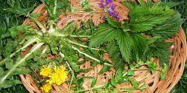 Какую пользу приносят сорняки – мнения ученых и аграриев
