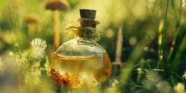 Лекарственные растения на даче – что стоит посадить?