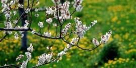 Подготовка сада к весне – что нужно сделать садоводу?