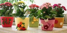 Посадка цветов в горшки – залог красивого интерьера!