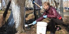 Побелка плодовых деревьев осенью как защита сада от морозов