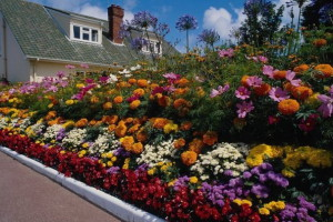 Фото клумбы с многолетними цветами, 4gazon.ru