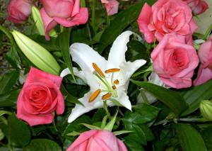 На фото - лилия и розы, xsunx.ru