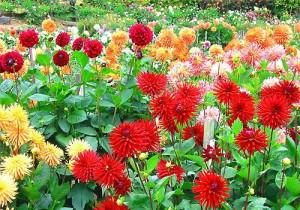 Фото садовых цветов, otvetin.ru