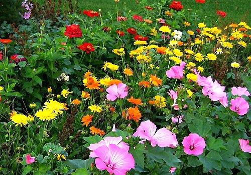 На фото садовые светолюбивые цветы