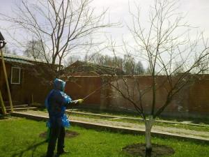 Фото опрыскивания сада ранней весной, agrus.ua