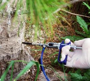 Фото опрыскивания ствола дерева от вредителей, liwood.ru