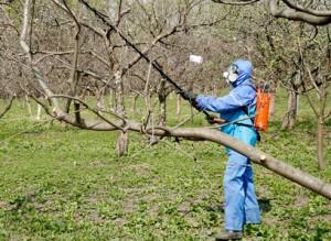 На фото - защитный костюм для опрыскивания деревьев весной, supersadovnik.ru