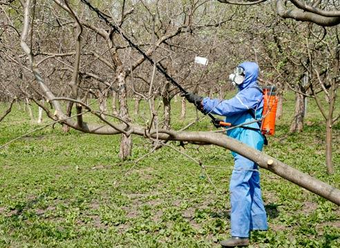 Чем опрыскивать плодовые деревья осенью