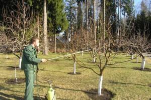 Фото опрыскивания сада весной, soweren.ru