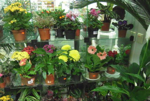 Фото комнатных цветов в горшках, flora-tambov.ru