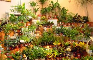 На фото - выбор комнатных цветов в горшках, cvetokfauna.narod.ru