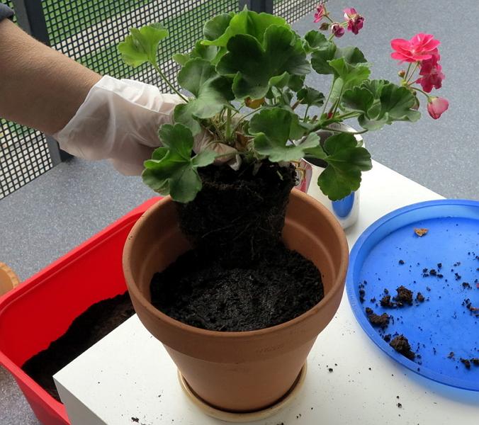 В какие горшки лучше сажать домашние цветы 54