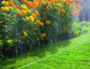Фото про правильную посадку овощей, ysadba.my1.ru