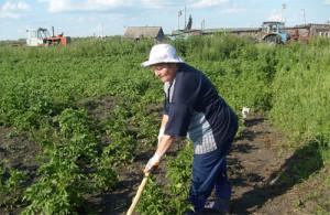 На фото - ручная прополка огорода, remont-dach.ru