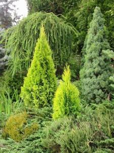Фото хвойных растений в ландшафтном дизайне, liveinternet.ru