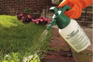Как бороться с сорняком мокрица