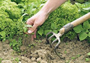 Правила для получения ухоженного участка без вредителей–сорняков