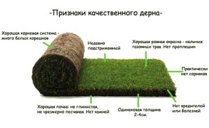 Спортивный газон: состав трав и этапы посева
