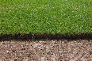 Спортивный газон: состав трав и этапы посева фото