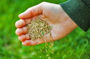 Посев травы для спортивного газона фото