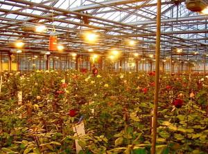 Фото освещения теплицы, nestortech.ru
