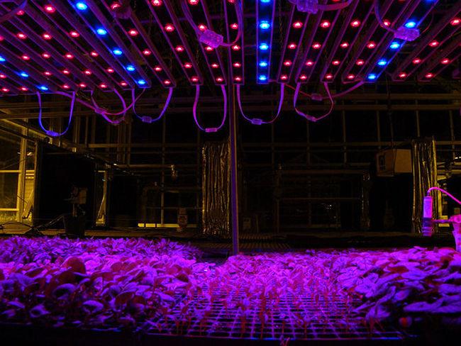Светодиодные освещение в теплице