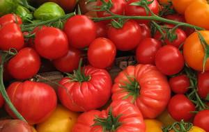 На фото - сорта помидоров для теплицы, tomatomania.ru