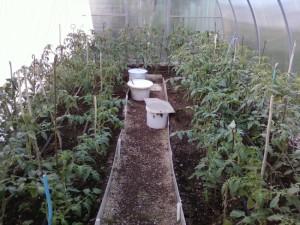 Фото бороздок для орошения помидоров в теплице, atmagro.ru