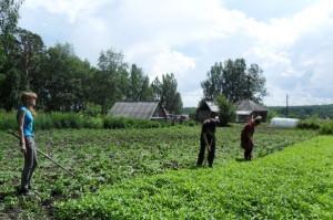 На фото - прополка огорода, единоличник.рф
