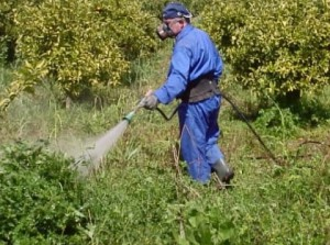 Фото обработки участка гербицидами, fb.ru