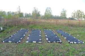 Пленка для огорода от сорняков или черный чудо-материал
