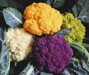 Цветная капуста: выращивание рассады в огороде