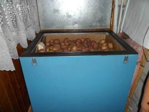 Хранение овощей, фруктов и плодов в домашних условиях зимой: на кухне и балконе фото