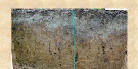 Подзолистые почвы: их виды и методы окультуривания